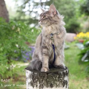 Котенок Басе.